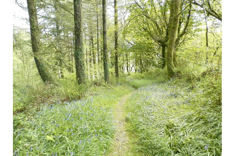 Lovely Woodland Area
