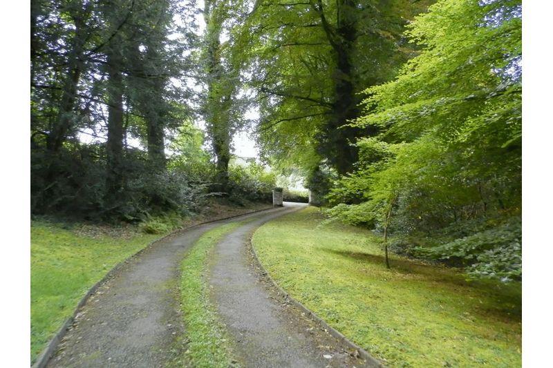 Sweeping Driveway