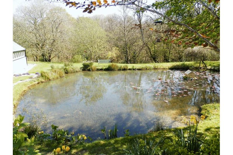Pond And Woodland