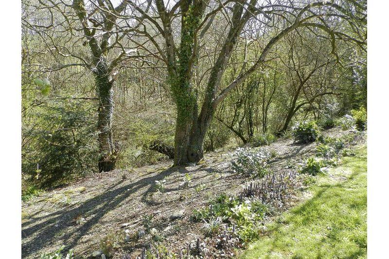 Views Over Woodland