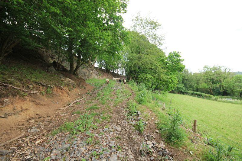 Track Through Woodland