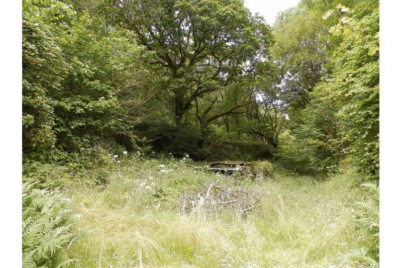 Woodland Behind House