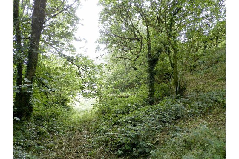 Paths Through Woodland