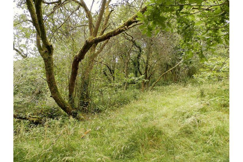 More Woodland