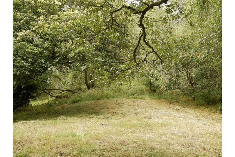 Grass And Woodland