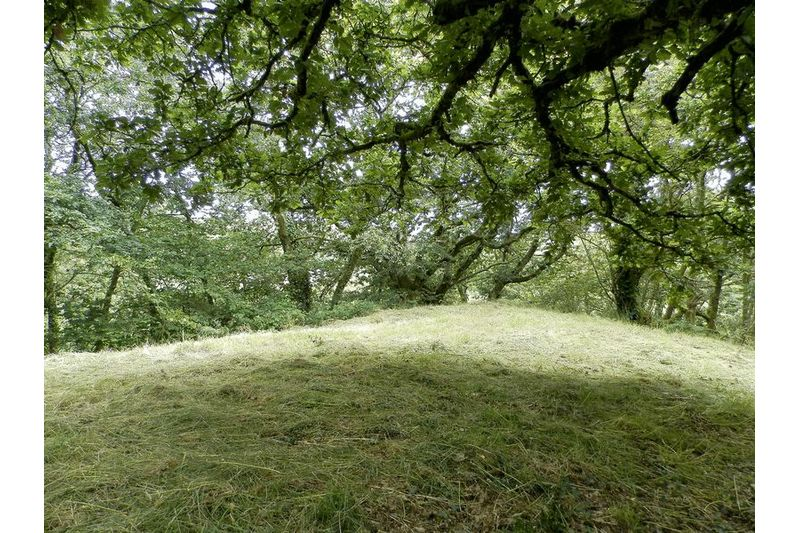 Grass Area And Woodland