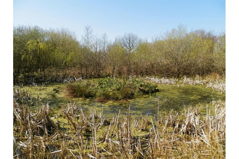 2nd Overgrown Pond