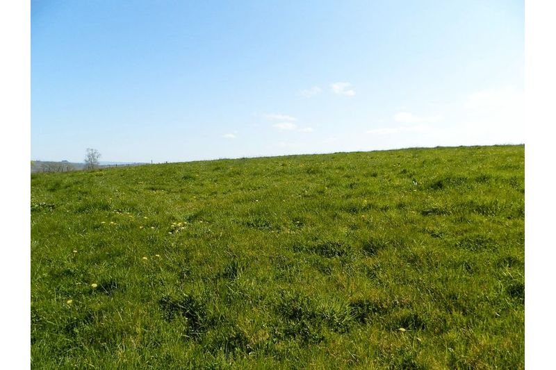 Good Pastureland
